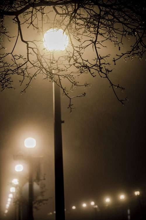 La-Crosse-Foggy-Vertical-Tree