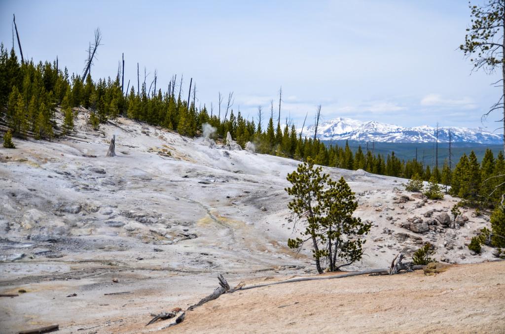 Yellowstone12