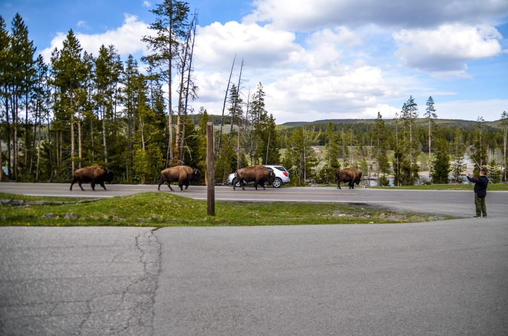 Yellowstone30